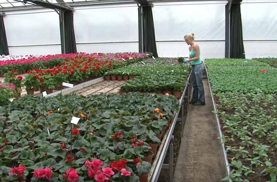Horticulteur / Horticultrice CFC - floriculture et paysagisme