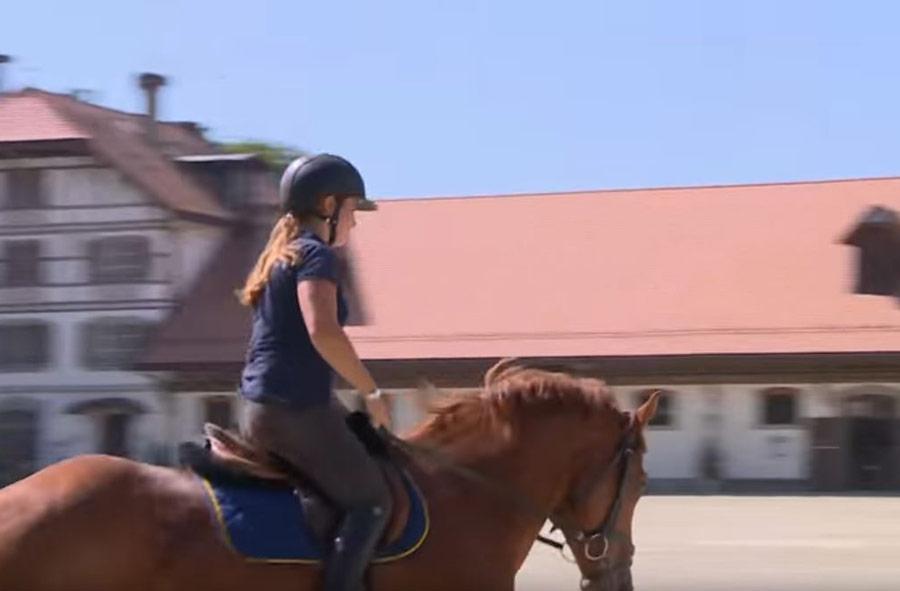 Professionnel / Professionnelle du cheval CFC - soins aux chevaux et monte classique